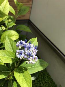 庭の草花や木々との暮らし R+house薩摩川内 モデルハウス